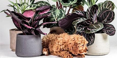 Brisbane - Huge Indoor Plant Warehouse Sale - Plants + Pups Sale! tickets