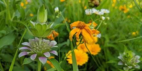 GREENER THAN GRASS: a Sustainable Landscaping Workshop tickets