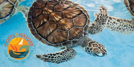 Coffs By Nature - Sea Turtle Walk tickets