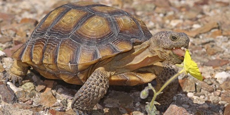 Mojave Desert tortoises and other desert animals (Ages 5-10) tickets
