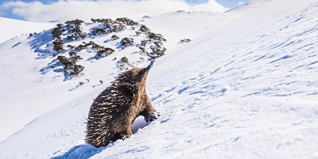 Photographing wildlife in the snow with Charles Davis tickets