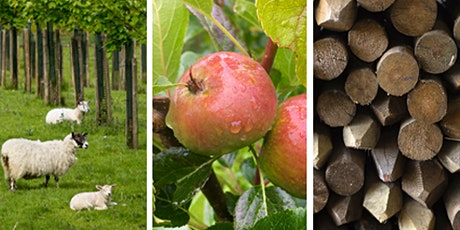Agroforestry in Scotland: Discussion groups tickets