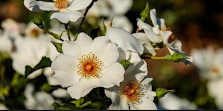 Santé Autonome et naturelle avec les précieuses fleurs de Bach billets