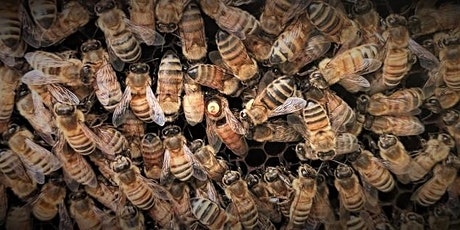 Central State University Bee Webinar Series: Caring for Honey Bee Queens tickets