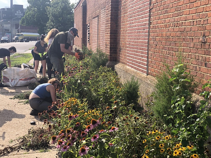 North Greenpoint Pollinator Pathway Care with NCA image