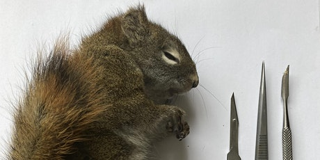 Squirrel Taxidermy tickets