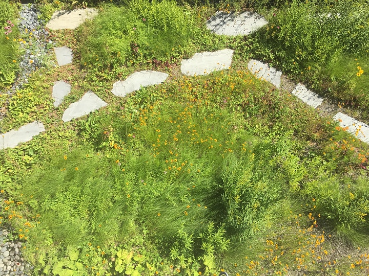 Kingsland Wildflowers Green Roof Care with NCA image