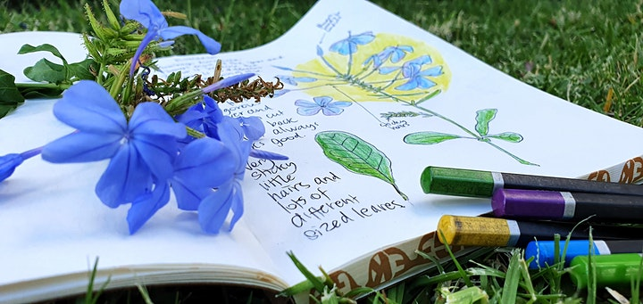Nature Journalling Workshop with Joanne Stead image