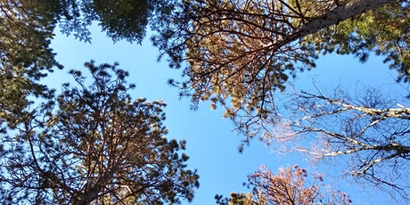 Walking with the Woods - Forest Therapy at Fort Snelling State Park tickets