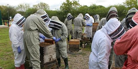 NDB Advanced Beekeeping Course 2021 tickets