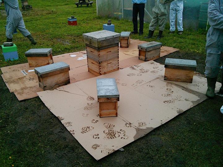 NDB Advanced Beekeeping Course 2021 image
