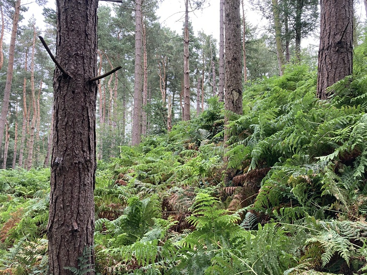Foraging Workshop & Walk - 'Introduction to Foraging' in The Lake District image