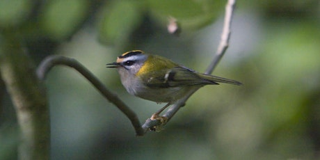 Counting the Birds of Sydenham Hill Wood tickets