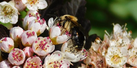 Planting for Pollinators tickets