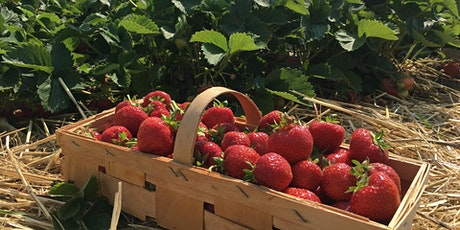 Growing Fruits and Berries at Home tickets
