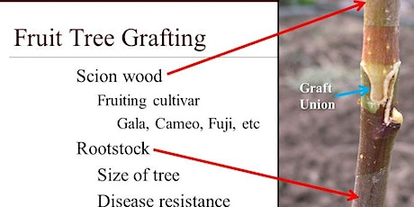 USU Extension Fruit Tree Grafting Class tickets