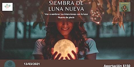 Siembra de Luna Nueva tickets