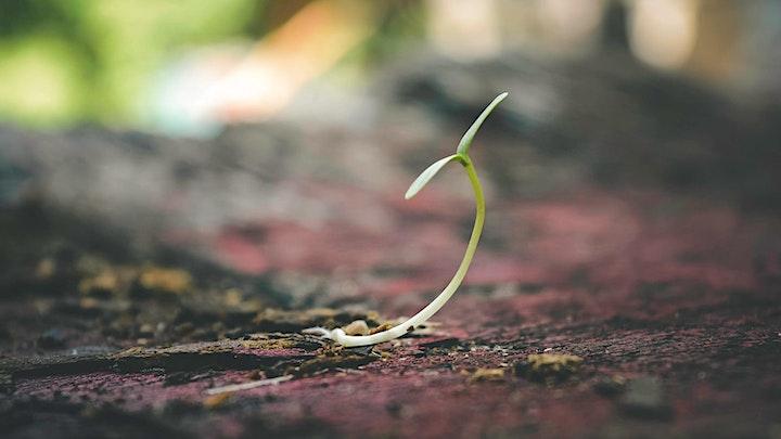 Hope - tender or audacious?  Virtual Field Trip image