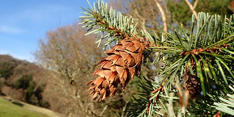 Conifer Identification Workshop ONLINE tickets