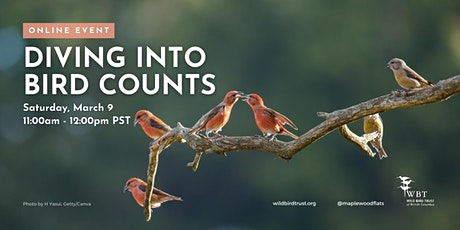 Diving into Bird Counts tickets