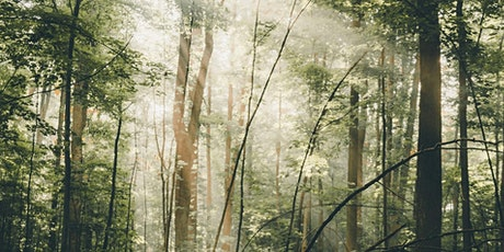 Forest Bathing+ Experience - Mindfulness in Nature at Box Hill tickets