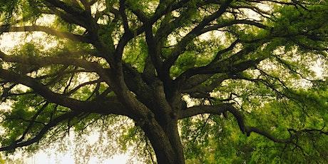 Ogam Tree Healing Workshop (Elder and Heather) tickets