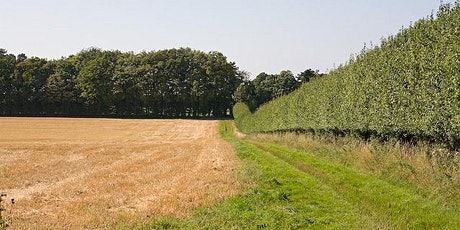 Healthy Hedges-Nature Conservation Skills-Rufford Abbey Country Park  - CL tickets