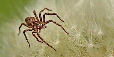 Spiders Webinar tickets