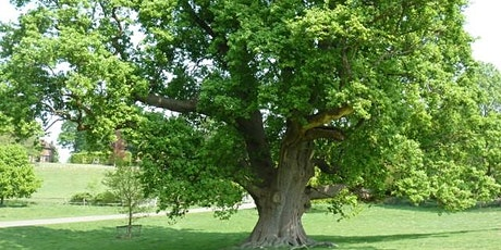 Tree Identification - Warsop Parish Centre - Community Learning tickets