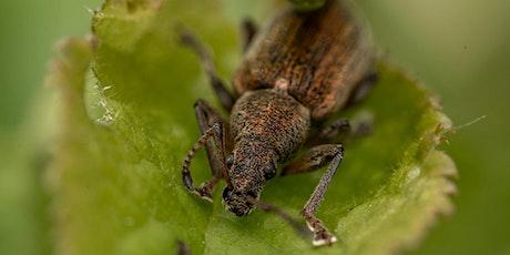 Inventaire à la découverte des insectes de Lyon billets