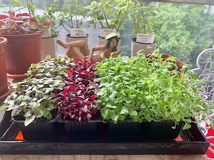 How to Grow Microgreens at Home image