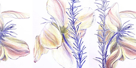 STARTING May 16th |Botanical Drawing May! tickets