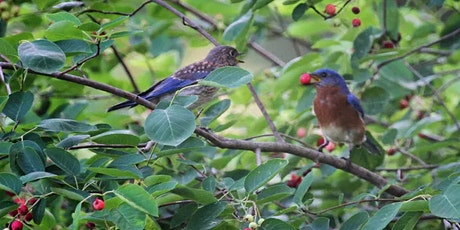 Beauty and the Beasties: Landscaping 101 for a Wildlife Friendly Garden tickets