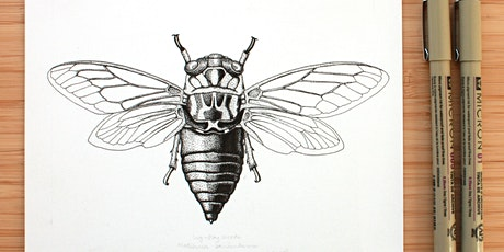 Insect Illustration tickets