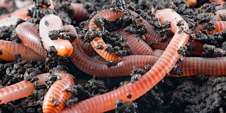 Worm farming for beginners tickets
