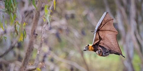 Bat Day: Batwatch by Night tickets