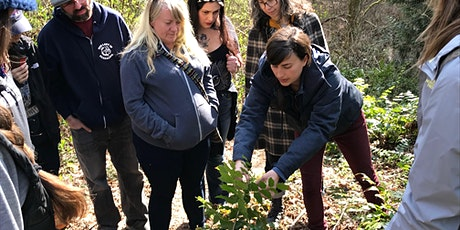 Edible and Medicinal Plant Hike and Learn: Cougar Mountain tickets