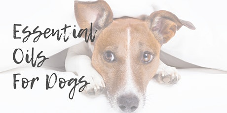 How to Use Essential Oils Safely On Your Dog tickets