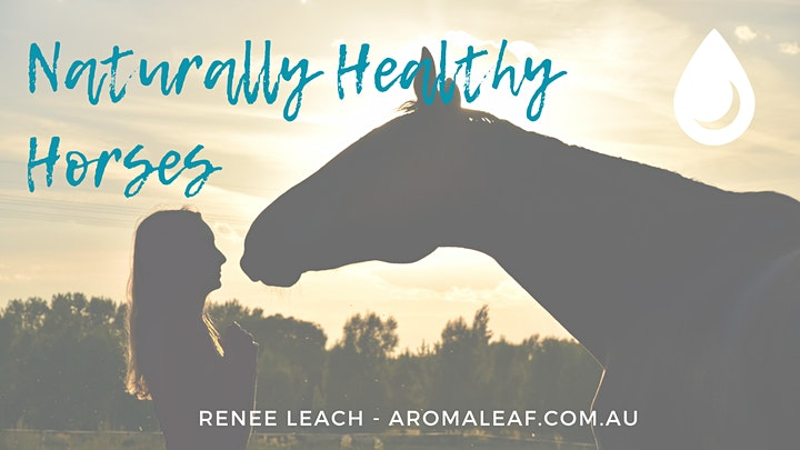 How to Effectively + Safely Use Essential Oils on Horses - FREE image