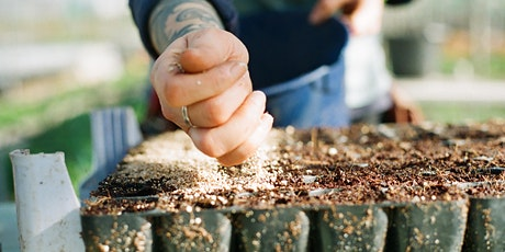 Get Growing! Free online gardening workshops. Free seeds, no garden needed. tickets