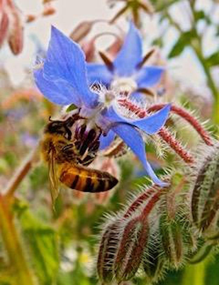 Beekeeping through the camera lens - a talk by Simon Croson image