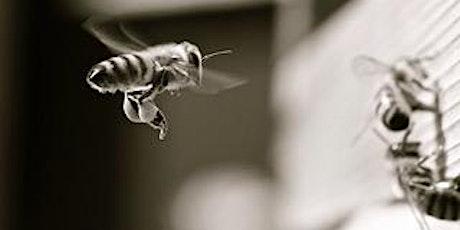Beekeeping through the camera lens - a talk by Simon Croson tickets