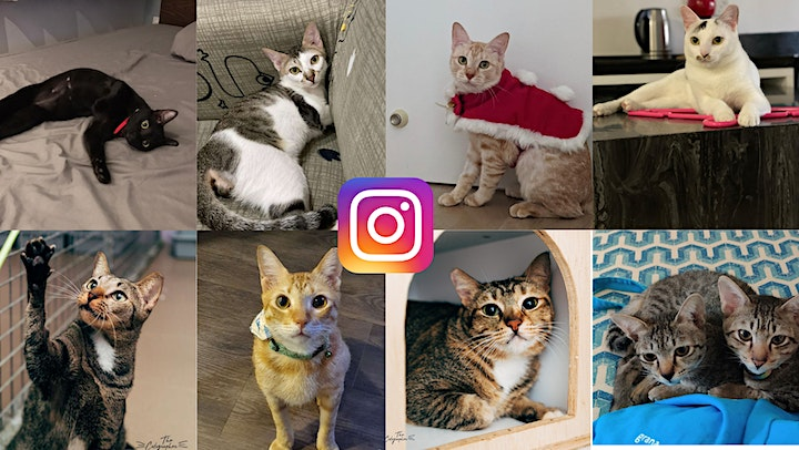 Cats of the World Purrzarr image