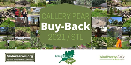 Callery Pear Buy-Back in St. Louis tickets