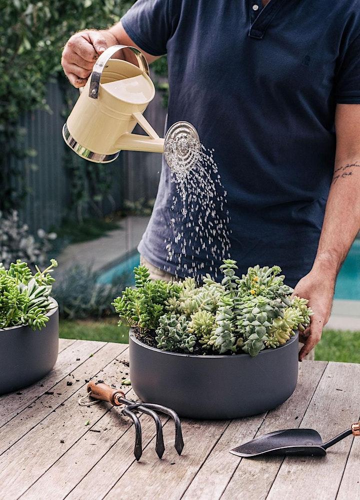 Succulent Bowl Workshop image