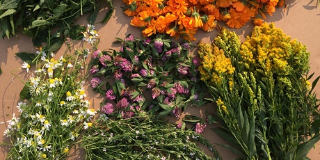 Medicinal Herb Micro-Farming Workshop - Spokane, WA tickets