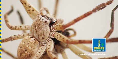 Let's Learn about Spiders! tickets