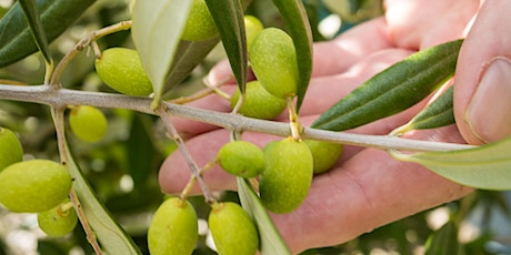 In the Olive Orchard - A tasting and learning experience workshop tickets
