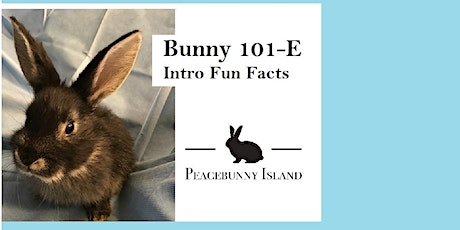 Bunny 101E: Rabbit Fun Facts tickets