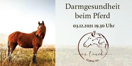 In Touch Animal - Darmgesundheit Pferd Tickets